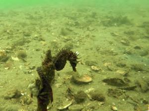 Hippo OceanObs 09Juin18 GoPro Capture d-ecran (62bis)